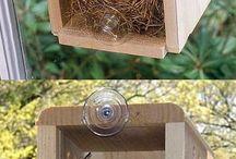 Maison oiseaux contre vitre