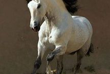 *real* horses