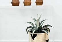 Plants I love in my home