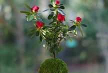 Nature / Harmonies végétales