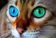 ogen!!