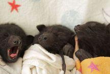 Bats / by Chloe Lola