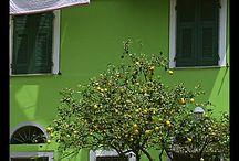 Gröna hus