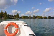 Les richesses du Lac / #Faune #Flore #Eau #Cygnes #Voile #Aviron