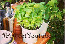 Grub Garden / YouTube Channel