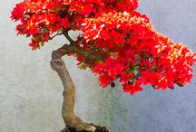 bonsai (。・ω・。)