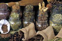 Piante Aromatiche e Officinali
