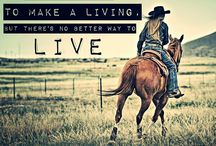 Quotes about horses