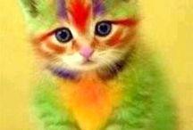 kolorowe koty