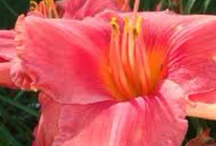 Fleurs/plantex exotiques