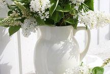 Fleurs Blanches / mes préférées