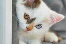 Kitten!!!!!!!