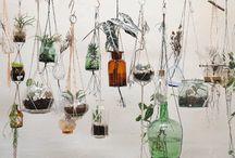 Bottled Garden