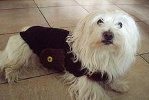 Crochet manteau chien