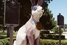 What's Up Doc? / Because jack rabbits rule & are cool