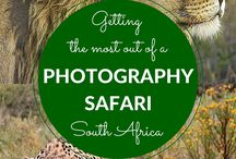 Photo Safaris