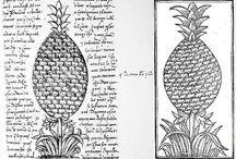 Pineapple. Botanical Illustration.