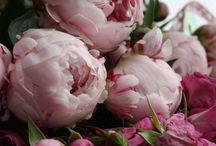 bloom / flowers#garden#colors