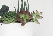 Crazy Plant Ladies