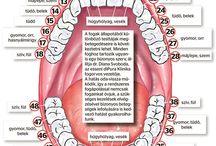 egészség a fogakkal