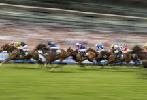 Artistic Racing Shots / by Horse Racing Ireland - goracing.ie