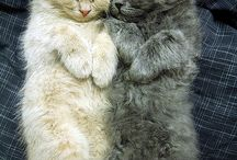 Sis/bros cats cute