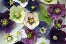 pretty flowers / by Nicole Vande Zande