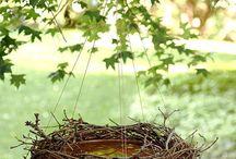 In The Garden / Flowers, herbs, gardening, birds, bird feeders & more...