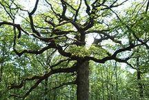 arbres / toutes les sortes possibles