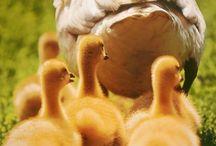 Birds of a Feather / by Deb Hamilton