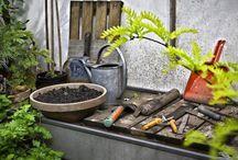 il Giardiniere / Giardinaggio Agricoltura - Orticoltura - consigli pratici