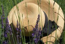 Just Hats / by Kandi apple art gallery