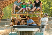 Safari in the Sonoma Serengeti / Enjoy a fascinating three-hour riding and walking adventure in Safari West's 400-acre preserve. / by Safari West