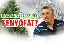 Karácsonyfa típusok, tanácsok