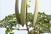 Справочник индийских растений / О полезных индийских растениях