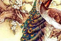Love ❤️ Peacock