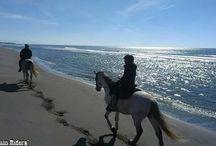 Horse Riding in Montenegro