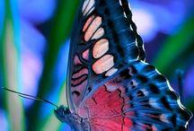 farfalle e animaletti belli