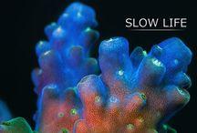 Corals & Sponges