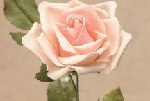Gump as te big rose
