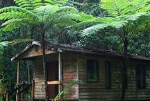 Australian Native Tropical & Rainforest Plants / Australian Native Tropical & Rainforest Plants