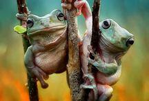 Froggies ^_^