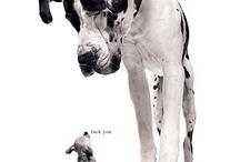 Animals / by Abigail Watson