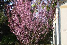 Archív - 2010, Tavasz / Képek a Leleszi Pihenő előtti közelmúltból