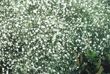 White Flowers and Plants