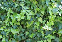 Ratgeber & DIY - Pflanzen, Pflanzkübel, Garten