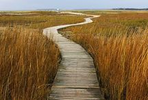 Cape Cod Beaches / If you're planning a trip to Cape Cod, Massachusetts, you have to check out this board. We will share our favorite beaches in Cape Cod so you can find the best spots while you're here.