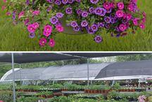 Garden Center / Garden Center
