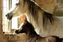 Horse Beauty 5