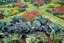 veg and flowers